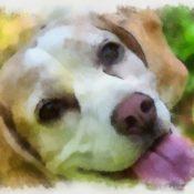 beagle-1615037_1920-crop